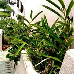 ダンダン畑でつかまえて 植え込みグリーン