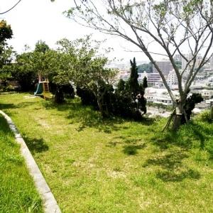 ダンダン畑でつかまえて 緑鮮やかな隣接する公園