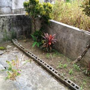 壮大なる庭造り宣言!  植え込み