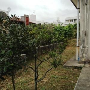 壮大なる庭造り宣言! 玄関側庭