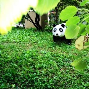 羨望眺望元気予報! パンダ