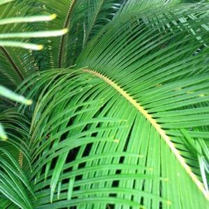 8LDKのキャパ! 庭の涼しげなグリーン